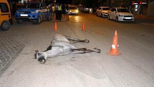 Ölen atı bırakıp kaçan faytoncuya ağır ceza