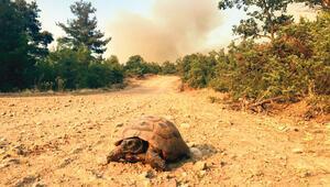 Milyarlarca arı binlerce kaplumbağa
