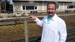 Prof. Dr. Ömer Çetin: Hayvancılık konusunda milli politikalar geliştirilmeli