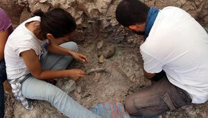 8.5 milyon yıllık fosiller bulundu