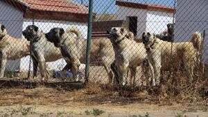 Polisin toplumsal olaylarda Kangal köpeği olacak