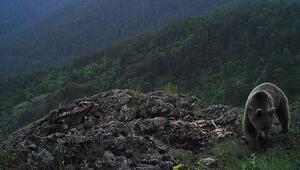 Kızılcahamam dağlarında kapana takılan fotoğraflar