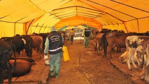 Kurban çadırları hijyenik
