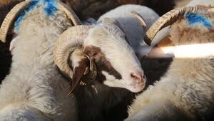 Diyanetten kurban etleri konusunda önemli tavsiye