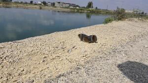 Sulama kanalına atlayan kadın kayboldu