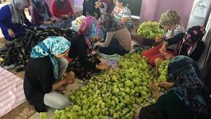 ÇATOMlu 22 kadın, sebzeleri kurutup satıyor