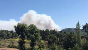 Suriyenin Türkmendağı bölgesinde orman yangını