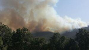 Bahçedeki yangın ormana sıçradı: 10 evde hasar oluştu (2)