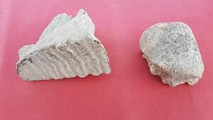 Tatarlı Höyük kazılarında Asya filine ait kalıntılar bulundu