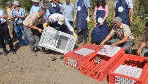 500 Keklik doğaya salındı