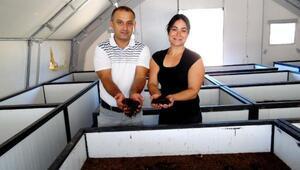 Muğlalı çiftten solucan gübresi üretimi