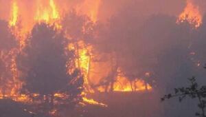 Nallıhanda 20 hektarlık çam ormanı yandı
