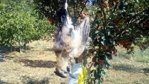 Belende karga avına 746 lira ceza