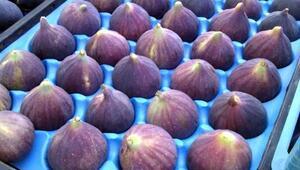 Bursanın siyah inciri Uzak doğu pazarında