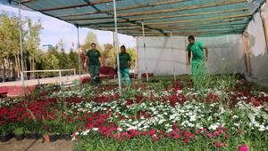 320 bin kış çiçeği