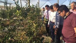 Emirgaziden Ukraynaya Japon armudu ihracatı
