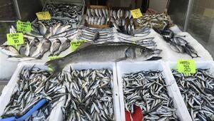 Karadenizli balıkçılar ilk ayda umduklarını bulamadı