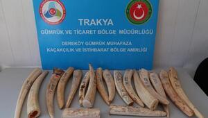 Dereköy Sınır Kapısında 18 fildişi ele geçti