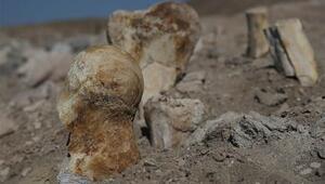 Keçi çobanı Kayseride buldu... 6 milyon yıllık