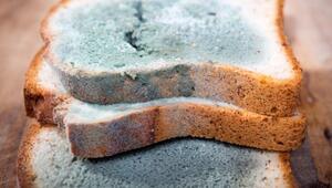 Ekmeğin bayatlayıp küflenmesini önlemenin yolları