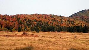 Küre Dağları Milli Parkında sonbahar güzelliği