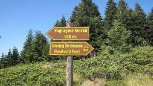 Ilgaz Dağı Milli Parkı'nda yön ve bilgilendirme levhaları yenilendi