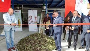 Burhaniyede yenilenen zeytinyağı fabrikası açıldı