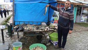 Varto da balık sezonu açıldı