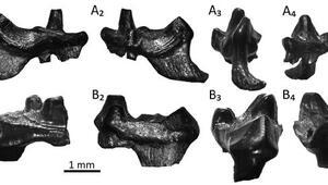 İngilterede bulunan kalıntılar memeli hayvan soyunun sırlarını ortaya çıkarıyor