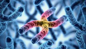 Telomer tedavisi nedir İşte telomer tedavisi hakkında tüm merak edilenler
