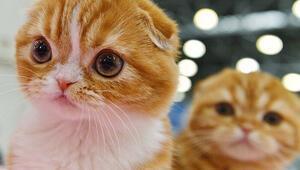 İngiliz polisi, seri kedi katilinin peşinde Kadınlar tehlikede