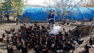 Hobi olarak başladığı tavukçuluğu ticarete dönüştürdü