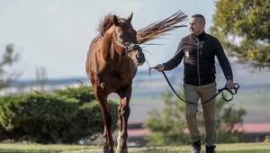 Yarışmadan, koşmadan servet kazandırıyorlar İşte o atlar...