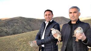 Siirtte, koruma altındaki oklu kirpi öldürüldü