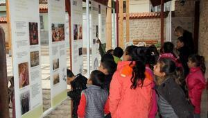 Hataya Zeytin Müzesi