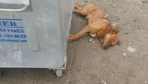 Gölköyde köpeklerin öldürülmesine soruşturma