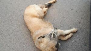 Pendikte akıl almaz görüntü; tampona sıkışan yaralı köpekle dakikalarca ilerledi