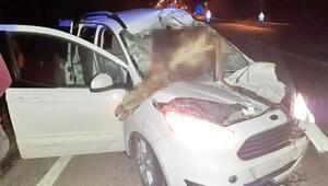 Aracın çarptığı inek ön camdan içeri girdi: 2 kişi yaralandı, inek öldü