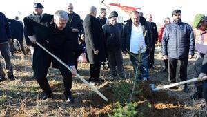 Ankarada 95 bin fidan toprakla buluştu