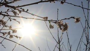 Aralık ayında Bursada sıcaklık rekoru kırıldı, ağaçlar çiçek açtı