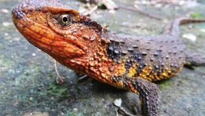 Mekongda 100den fazla canlı türü keşfedildi
