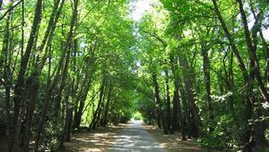 Yosun kokulu havasıyla Marmaris Milli Parkı