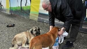 İngiliz Rossini 6 yıldır sokak hayvanlarını besliyor