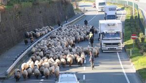 Koyun sürüsü ile karayoluna girdi, trafik karıştı