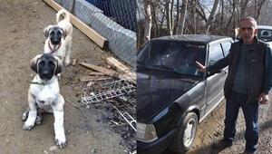Köpeklerini bulana bin TL, hırsızı bulana arabasını verecek