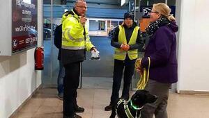 Marmariste sokak köpeğiydi, Almanyada havalimanında güvenlik aramalarında kullanılıyor