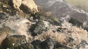 Sakarya Nehri, dökülen atıklarla kirlendi
