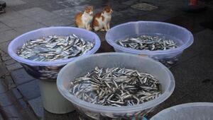 Ağlar boş,yüzler asık.... Balıkçılar Bakanlık istiyor