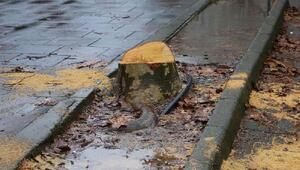 Arhavi Belediye Başkanı: Parktaki ağacı kesene 2-3 mislini diktireceğiz