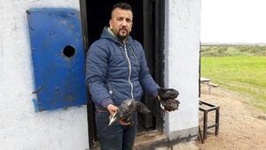 Hırsızlar 70 güvercini yakarak öldürdü